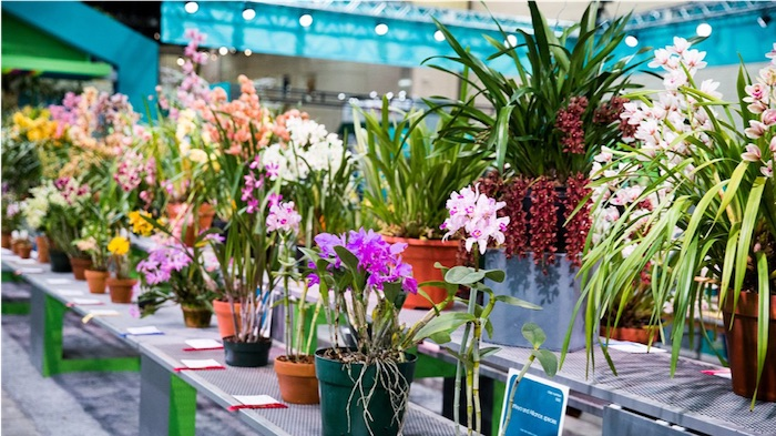 the flower show 2020 theme 1