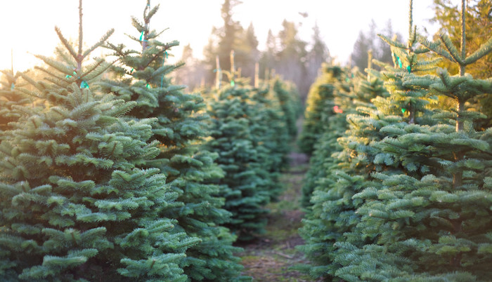 You Can Get Your Christmas Tree Where Taylor Swift Grew Up