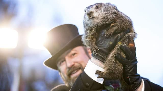 groundhog day - Punxsutawney Phil Doesn't See His Shadow, Predicts Early Spring is Coming